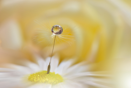 Abstract macro photo with water drops.Artistic Background for desktop.Flowers made with pastel tones.      Tranquil abstract closeup art photography.Print for Wallpaper...Floral fantasy design