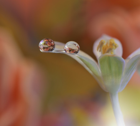 Abstract macro photo with water drops.Artistic Background for desktop. Flowers made with pastel tones.Tranquil abstract closeup art photography.Print for Wallpaper...Floral fantasy design.Modern Art.
