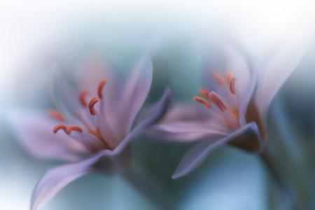 Beautiful Green Nature Background.Macro Shot of Amazing Spring Magic Flowers. Imagens