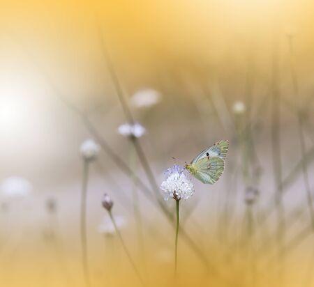 Beautiful Summer Butterfly on a White Flower.Creative Artistic Wallpaper.