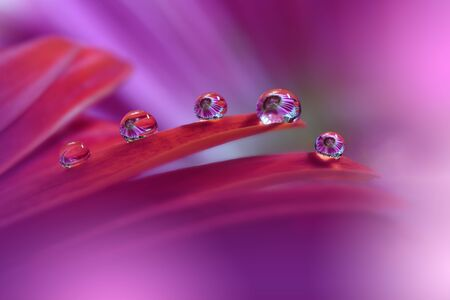 Abstract Macro Photography with Gerbera Daisy Flower and Water Drops.Creative Artistic Wallpaper.