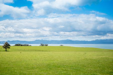 Green pastures overlooking the ocean and the coromandel peninsula
