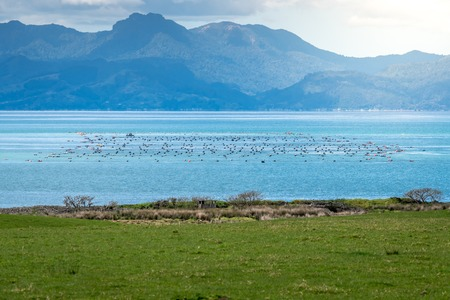 View of a boat fishing on the one of many mussel farms in the firth of thames on the coromandel peninsula