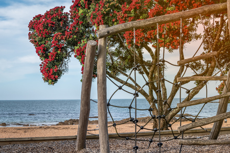 A playground by the beach with a beautiful blooming pohutukawa tree and the sea in the background