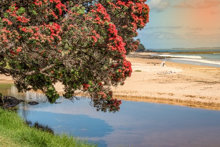 A beautiful photo of a pohutukawa tree hanging over the water Imagens