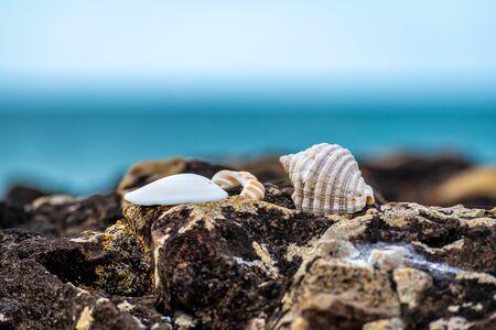 A close up of sea shells on a rock on a beautiful New Zealand beach
