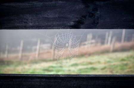 A photo of a spider web on a fence of a vineyard