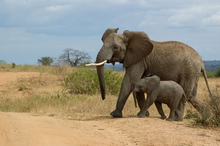 Elephant with child crossing the dirt road. Taken in Serengeti National Park, Tanzania, july 2005. Stock Photo