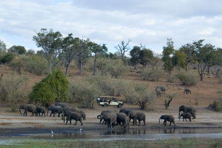 Tourist on a safari in Botswana