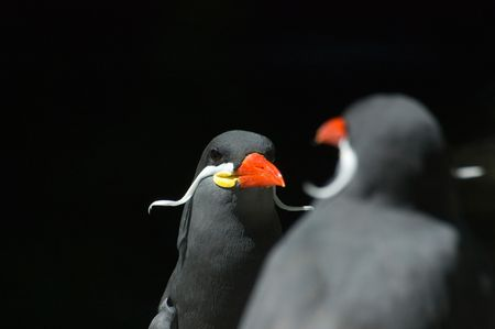 resemblance: Two birds examining the resemblance