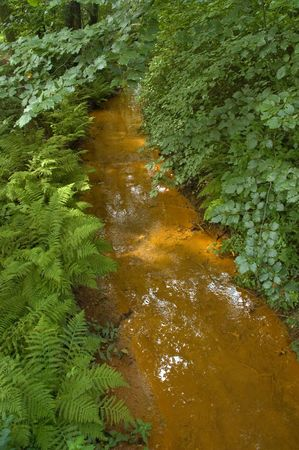 A polluted river in a green forest