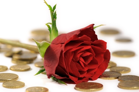 Vibrant red rose lying on stack of Euro coins