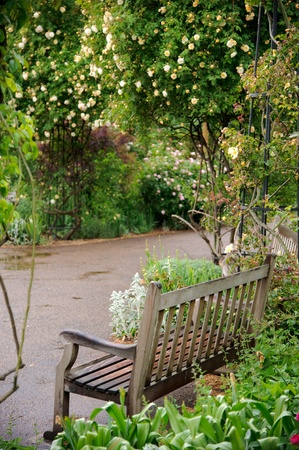 Wooden bench inside a rose garden with wet path