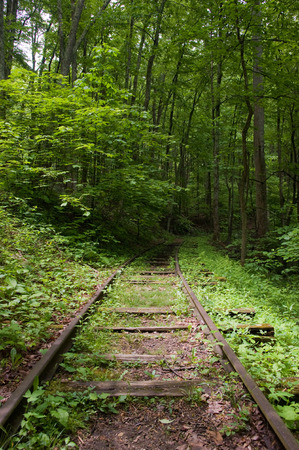 forest railroad: Old overgrown railroad leading into a green forest