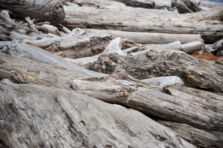 Pile of driftwood on a Pacific beach shore Stock Photo