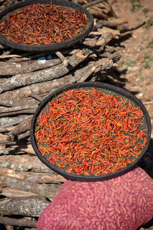 Fresh red chili peppers drying in the sun in a bowl
