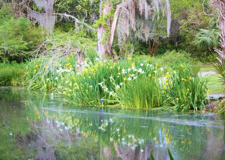 Pond with flowers, reflection