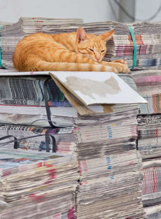 place to learn: cat asleep on top of stockpile with newspapers