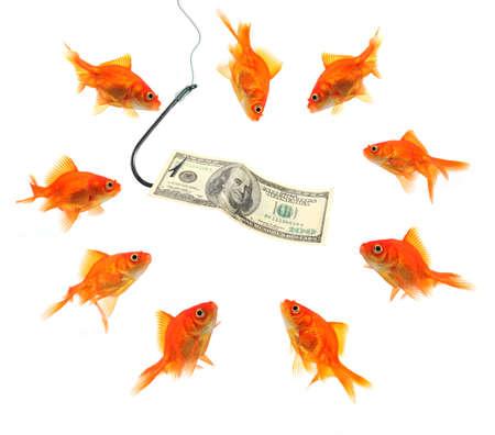 fishing goldfish with hundred dollar note isolated on white photo