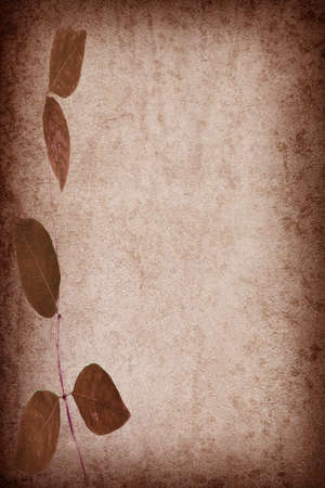 abstract grunge texture background with leafs for multiple uses photo