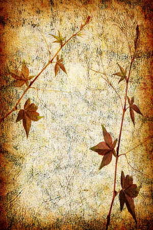 broad leaf: abstract grunge texture background with leafs for multiple uses