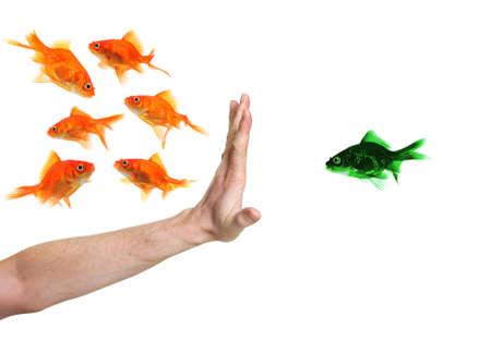 racismo: mano discriminar peces de colores verdes aisladas en blanco Foto de archivo