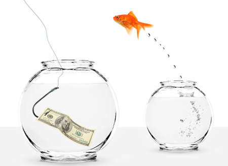 goldfish jumping into bowl with dollar on hook photo
