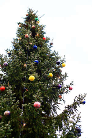 Outdoor Christmas tree decoration for multiple uses photo