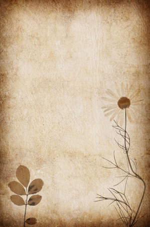 abstract grunge floral background with leaves for multiple uses Stock Photo - 7960994