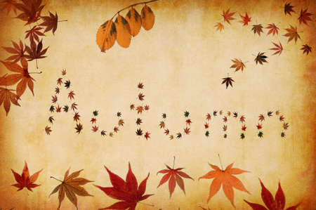 grunge background with autumn letters made by leaves photo