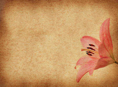 grunge paper floral background with pink lilly for multiple uses photo