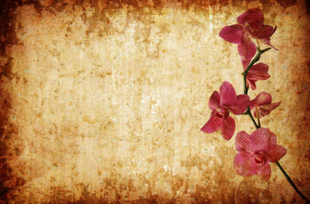 purple orchid abstract  floral background Stock Photo - 13207180