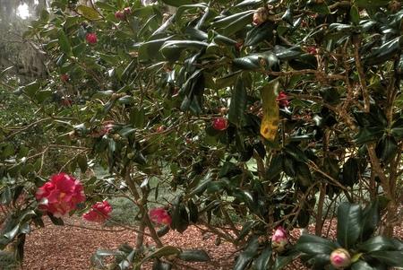 Washington Oaks Garden State Park is near Daytona Beach, Florida