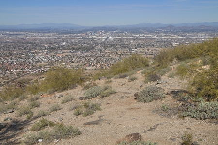 The Phoenix Skyline is surrounded by Desert and Cacti