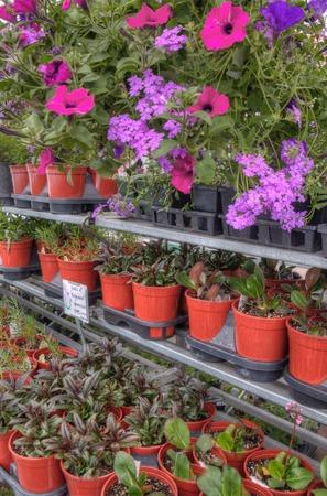 Plants growing in a Garden Center in Minnesota