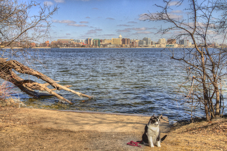 Luna the Adventure Kitty is a feline explorer who travels the midwest and beyond looking for new things to see and new places to visit.