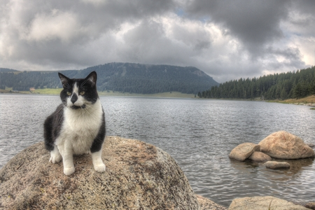 Luna the Adventure Kitty is a feline explorer who travels the midwest and beyond looking for new things to see and new places to visit. 스톡 콘텐츠 - 102959465