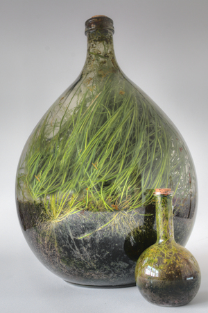 Plants growing in a large Glass Terrarium after several Years