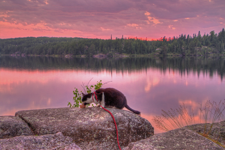 Luna the Adventure Kitty is a feline explorer who travels the midwest and beyond looking for new things to see and new places to visit. 스톡 콘텐츠 - 102929150