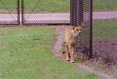 사우스 다코타 주 수 폴스에있는 동물원은 모든 연령대를위한 가족 친화적 인 명소입니다. 스톡 콘텐츠 - 102929153