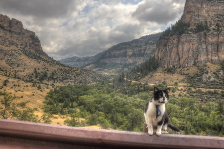 Luna the Adventure Kitty is a feline explorer who travels the midwest and beyond looking for new things to see and new places to visit. 스톡 콘텐츠 - 102944341