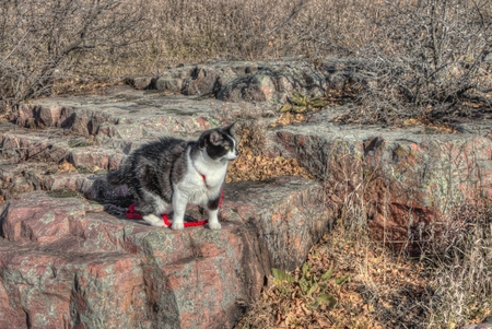Luna the Adventure Kitty is a feline explorer who travels the midwest and beyond looking for new things to see and new places to visit. 스톡 콘텐츠 - 102947804