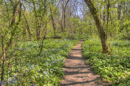 Carley State Park is a Rural area northwest of Rochester, Minnesota with Bluebells in late Spring