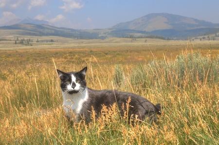 모험 고양이 스톡 콘텐츠 - 102933789