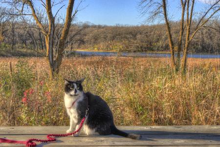 모험 고양이 스톡 콘텐츠 - 102933791