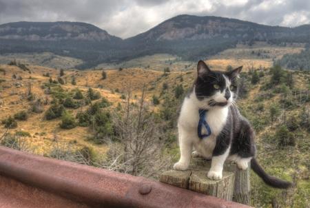 모험 고양이 스톡 콘텐츠 - 102933790