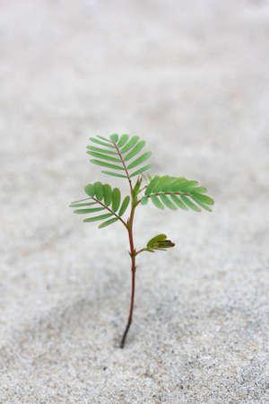 작은 나무