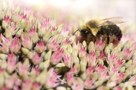 꿀벌 꽃 침대에
