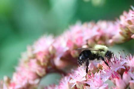 꿀벌 꽃가루에 꽃이 가득