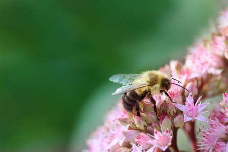 꿀벌과 꽃 스톡 콘텐츠
